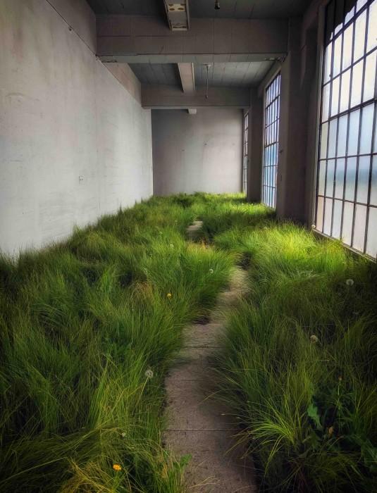 Dandelions: Indoor Garden