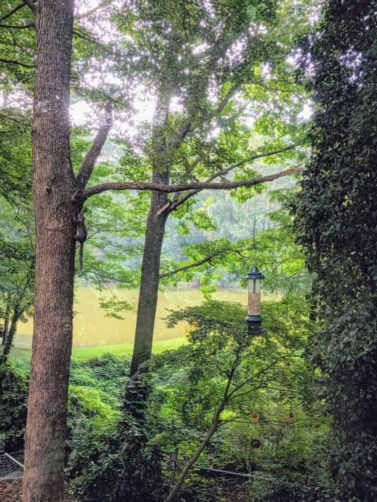 Georgia Green